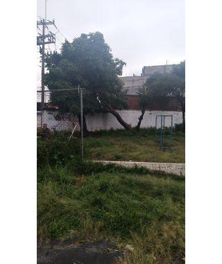 Árbol tirado en Calle 5 Norte